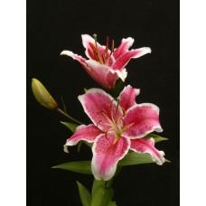 Лилия розовая (голландская)