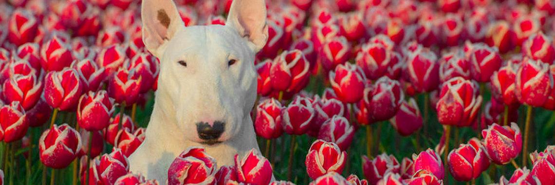 Эта собака очень любит цветы